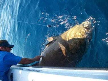 Captain Clint from Team Big Fish SGI with a Grouper